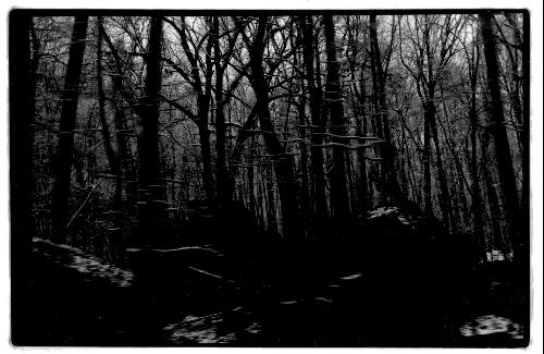 forestdrive
